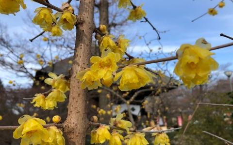 しあわせの黄色い祈願寺_多聞院