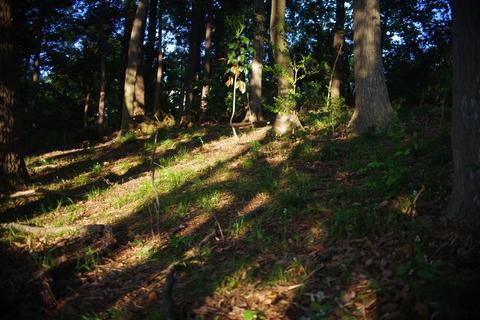 ギンランの森