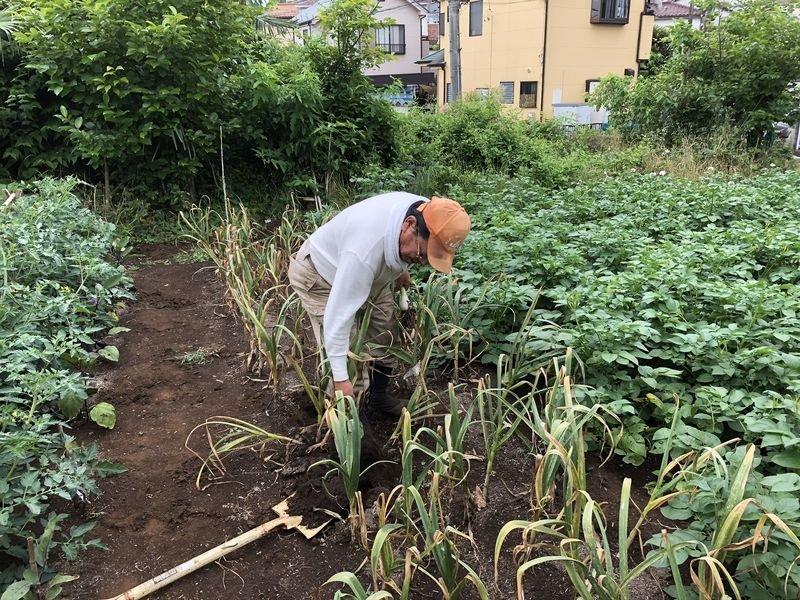収穫の楽しみ