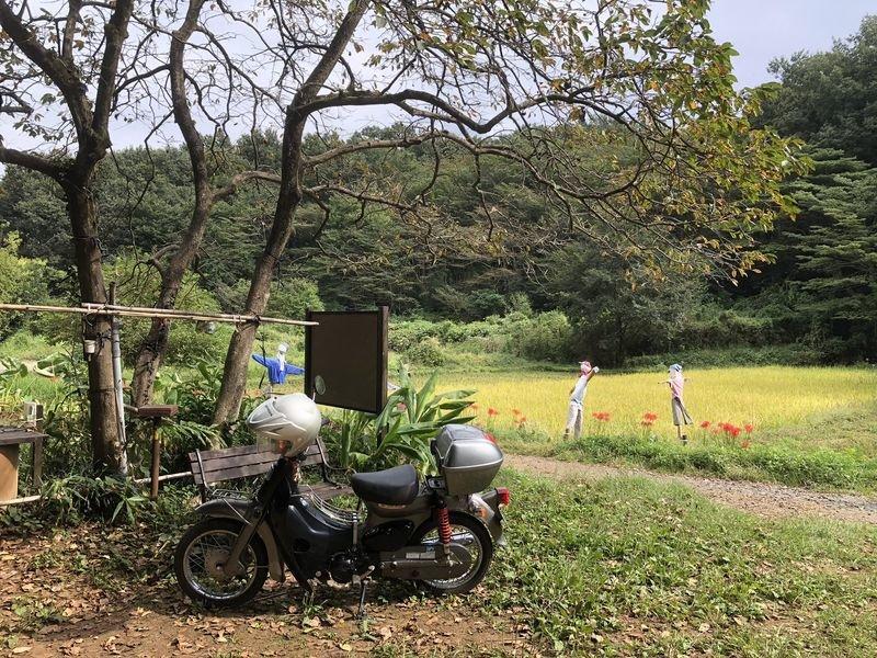 田んぼの台風対策