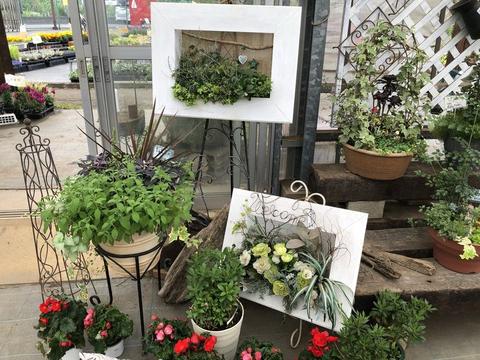 夏向き花壇のプラント選び