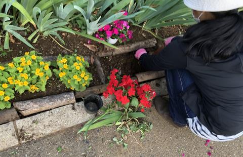 夏向き花壇へ植栽作業