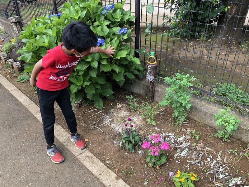 公園花壇の鑑賞マニュアル