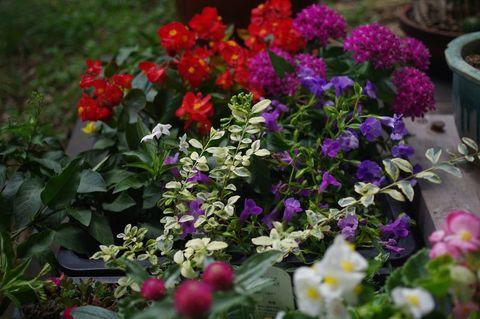 夏向き花壇の総仕上げ