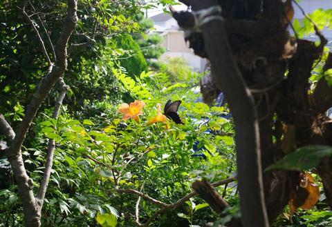 蝶の道とくま五郎