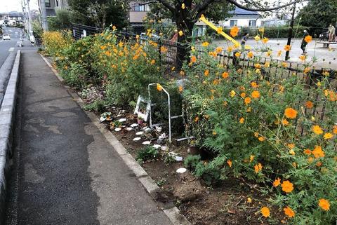秋の花壇の鑑賞マニュアル その後